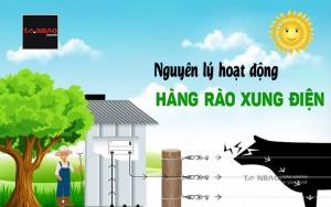 Nguyên lý hoạt động hàng rào xung điện