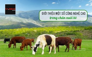 Giới thiệu một số công nghệ cao trong chăn nuôi bò