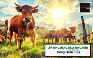 Áp dụng hàng rào xung điện trong chăn nuôi