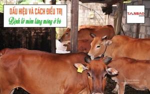 Dấu hiệu và cách điều trị bệnh lở mồm lăng móng ở bò