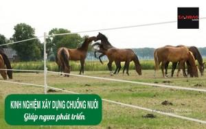 Kinh nghiệm xây dựng chuồng nuôi giúp ngựa phát triển