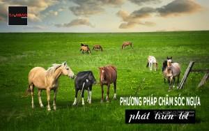 Phương pháp chăm sóc ngựa phát triển tốt