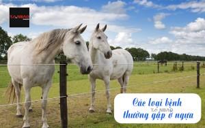 Các loại bệnh thường gặp ở ngựa