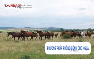 Phương pháp phòng bệnh cho ngựa