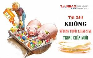 Tại sao không sử dụng thuốc kháng sinh trong chăn nuôi?
