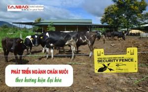 Phát triển ngành chăn nuôi theo hướng hiện đại hóa