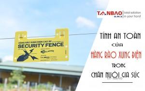 Tính an toàn của Hàng rào xung điện trong chăn nuôi gia súc